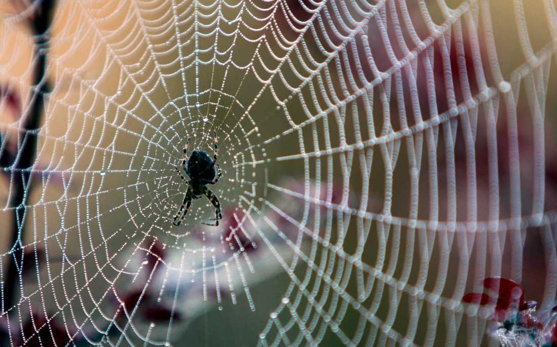 Jag har aldrig sett en spindel med dålig självkänsla, skriver Malin Wollin.