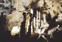Europas största system av kalkstensgrottor. I den största grottan, Postojna, kan du åka minitåg in i tunnlarna och lära dig allt om stalagmiter och stalaktiter.
