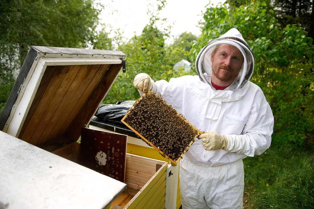 Mikrobiologen Tobias Olofsson vid Lunds universitet har tillsammans med kollegan Alejandra Vasquez upptäckt att det finns 13 olika mjölksyrabakterier i nyskördad honung samt i binas honungsmage. Tillsammans verkar mjölksyrabakterierna som bredspektrumantibiotika som kan döda antibiotikaresistenta bakterier från sår, enligt två nya studier.
