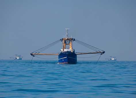 WWF varnar för att Östersjötorskens bestånd har minskat och vill att trålfisket ska upphöra.