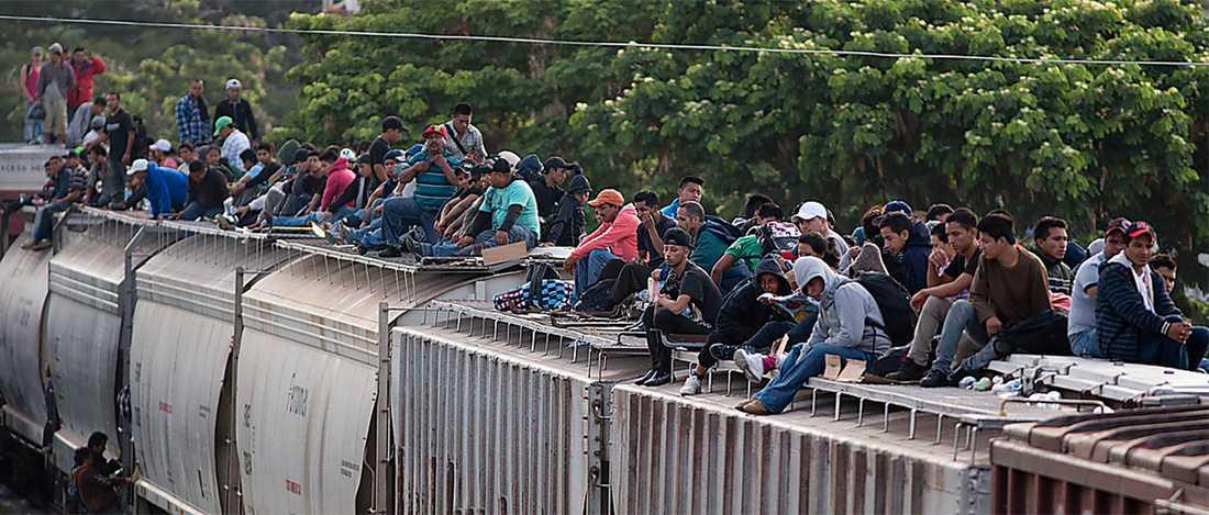 Sydamerikanska migranter på väg mot USA med godståg. Foto: AP