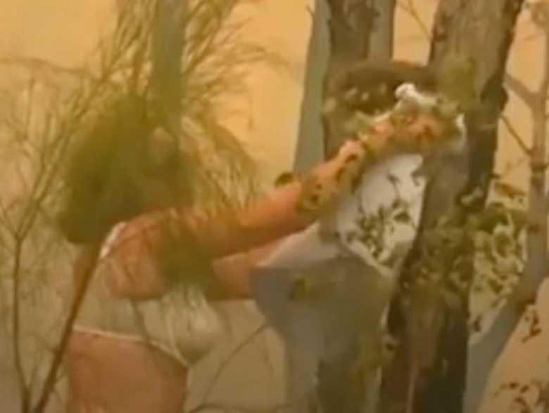 Den heroiska famorn slet av sig blusen för att rädda koalan Lewis.