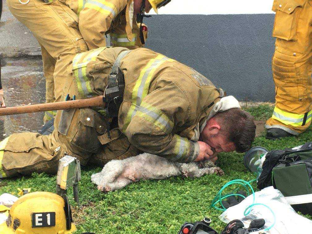 Hunden fick tillbaka livet tack vare brandmannen Andrew Kleins räddning.