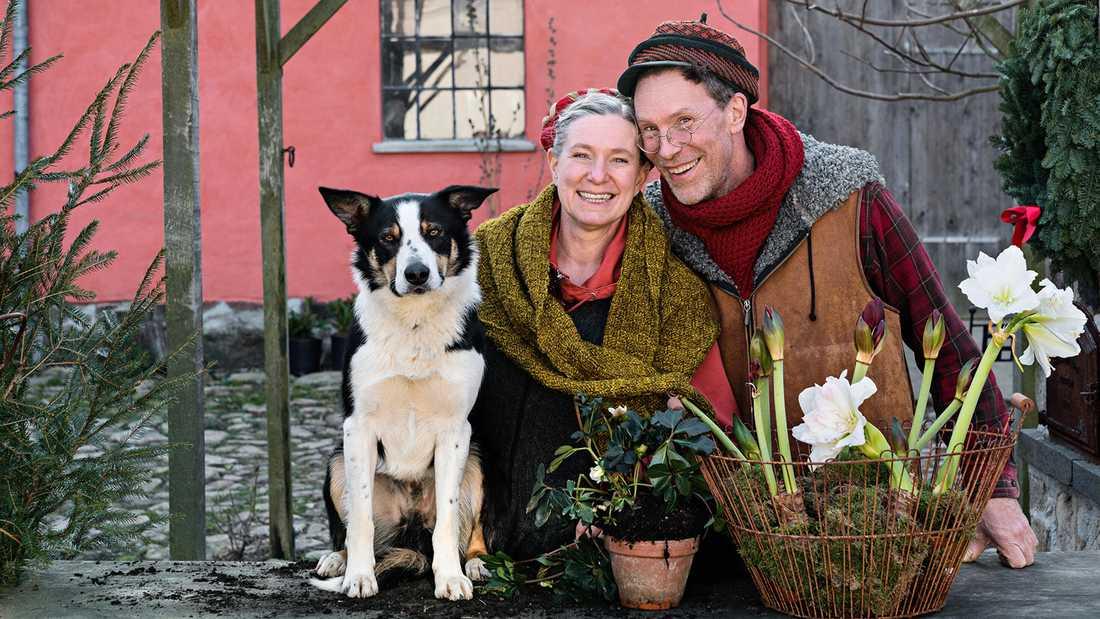 Gustav och Marie Mandelmann laddar för jul på gården med vallhunden Saffran.