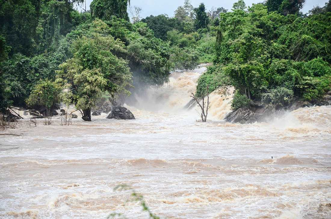 ElNiño påverkar vädret i stora delar av världen. Det blir bland annat regnigare i Sydamerika och mycket torrare i Australien.