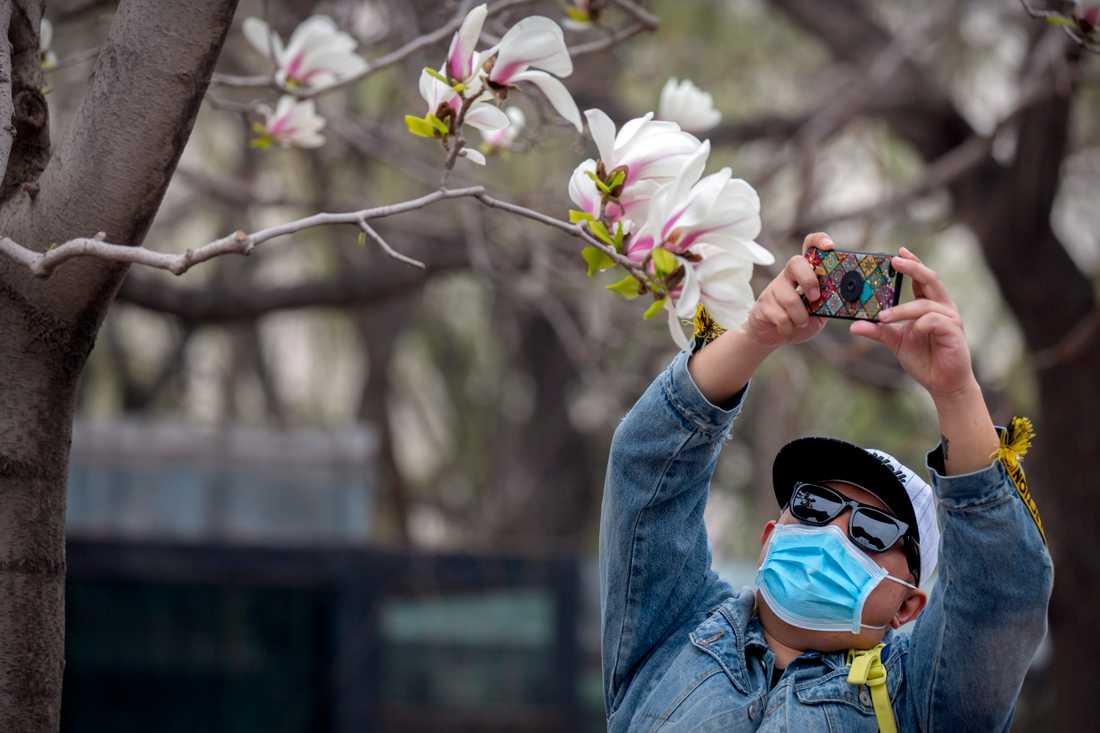 Försäljningen och produktionen av munskydd i Kina har skjutit i höjden såväl innanför som utanför Kinas gränser. Här är en besökare på ett zoo i Peking som nyligen öppnat igen efter att ha varit stängt på grund av coronautbrottet.