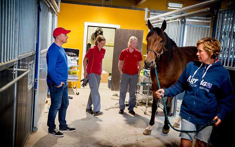 Tisdagar i stall Bergh körs det nästan inga hästar.  Istället är det allmänt pyssel och veterinären är på plats för att kolla up vissa hästar.