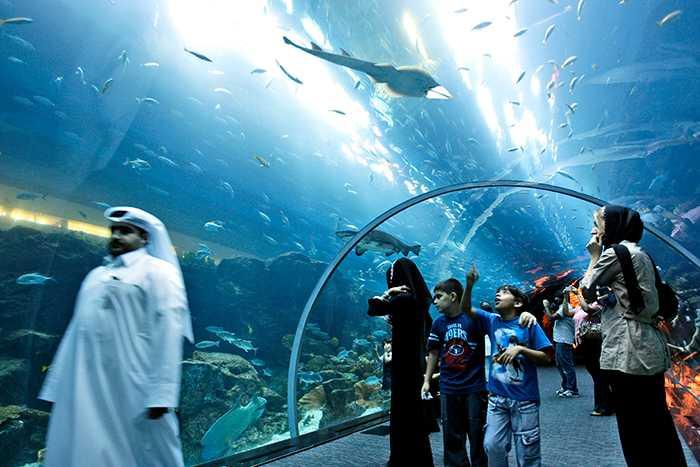 Här promenerar människor genom akvarietunneln, med massor av marina djur simmandes över dem.