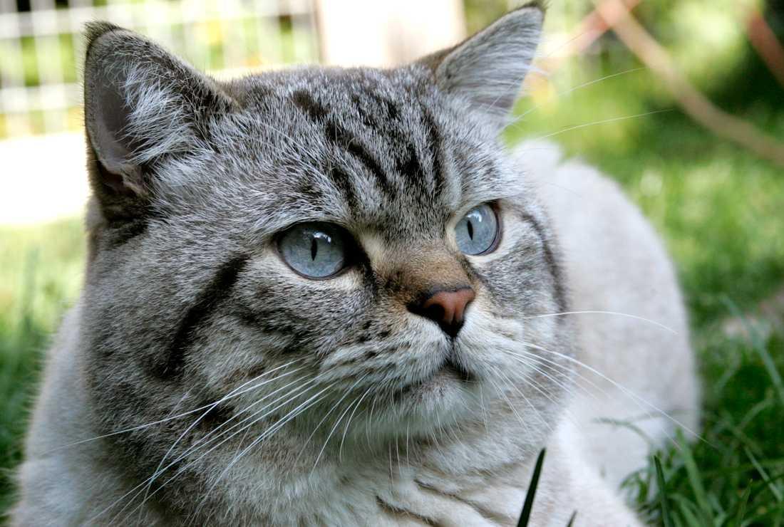 En helt annan katt. Arkivbild.