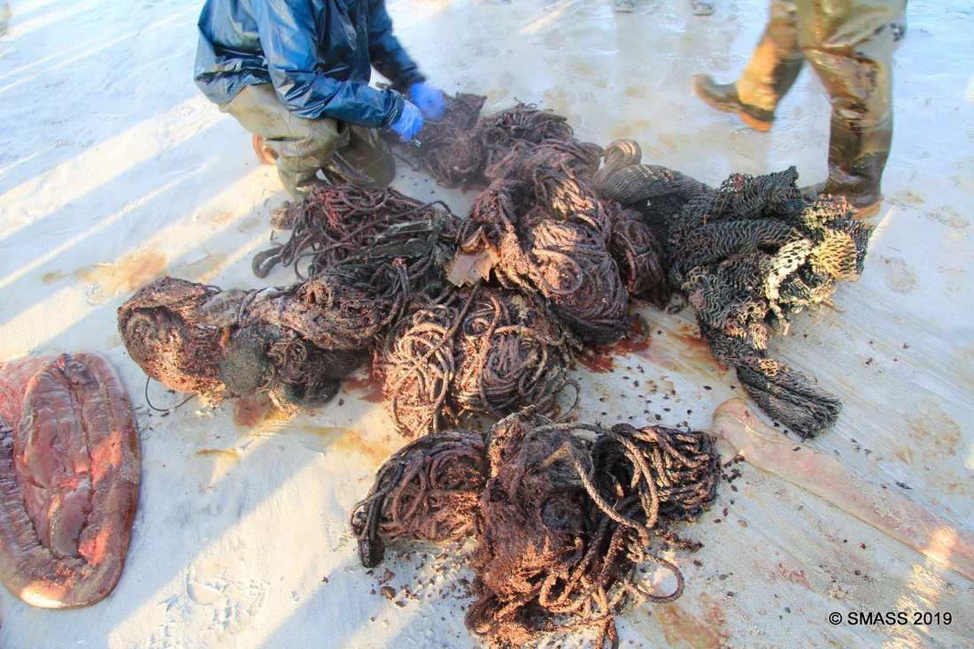 Hundra kilo skräp fanns i magen.