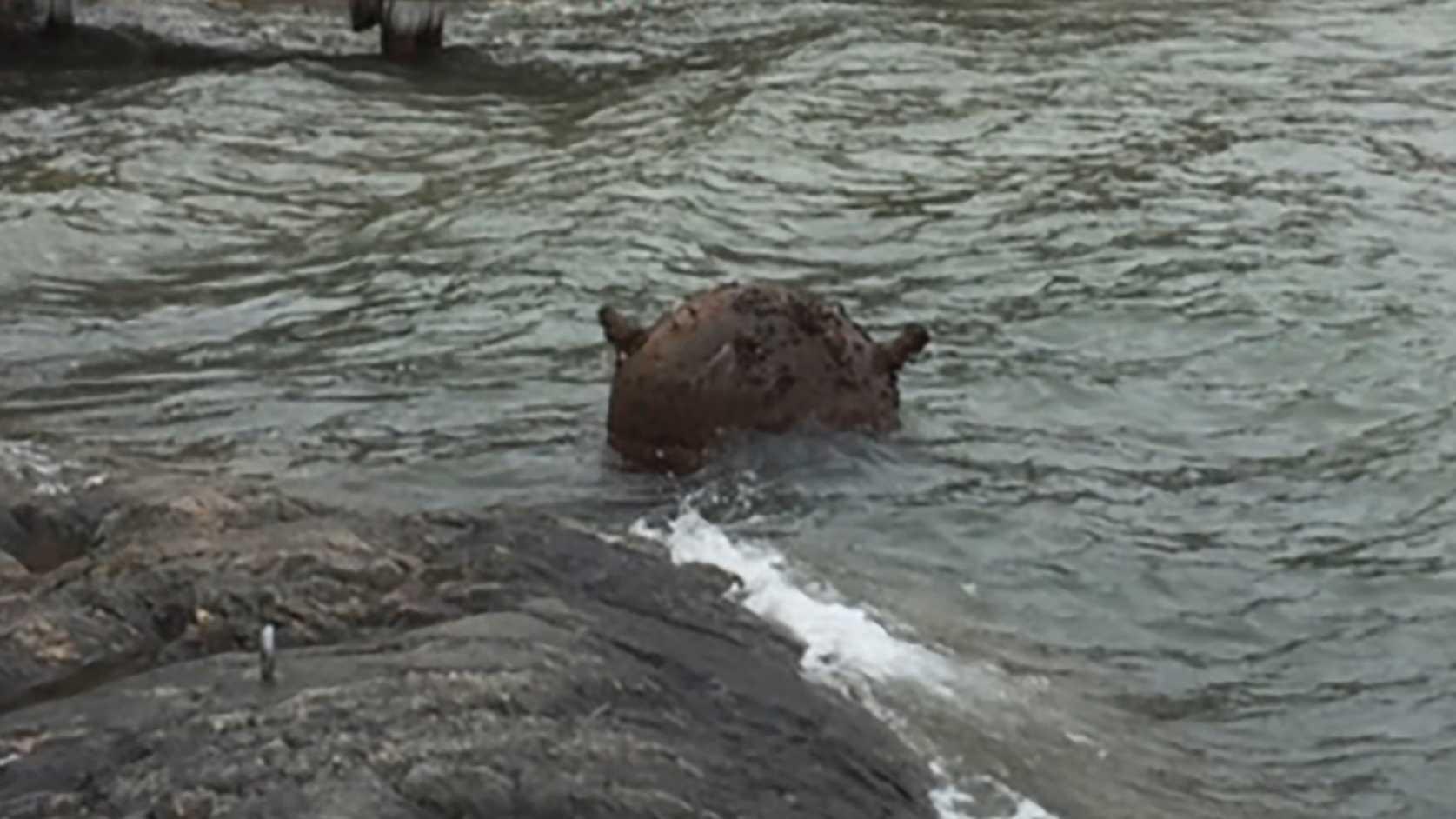 En mina har hittat till havs. Minan på bilden hittades i Stockholms skärgård 2017.