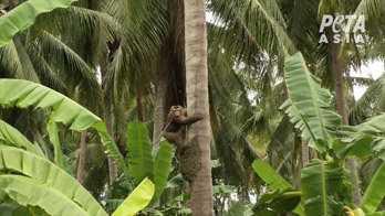 Många av aporna ska ha tagits illegalt från sina hem som ungar.