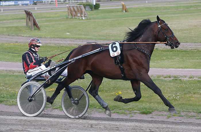 Dyrgripen Carmine Am går ut i Kriteriekval på onsdag. Och det väntas spännande ändringar på hästen.