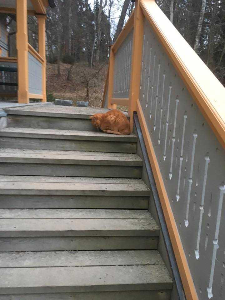 Sebastian, som är 16 år och blind, hittades på en trappa cirka två kilometer från hemmet.