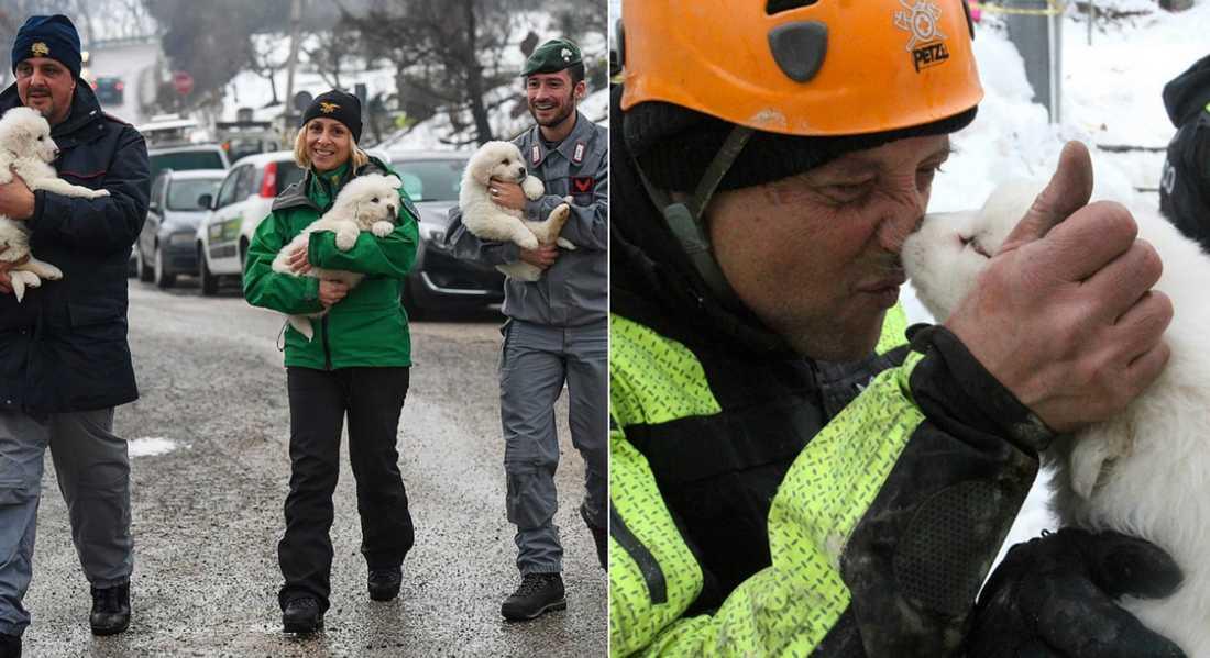 Här räddas hundarna från katastrofen.