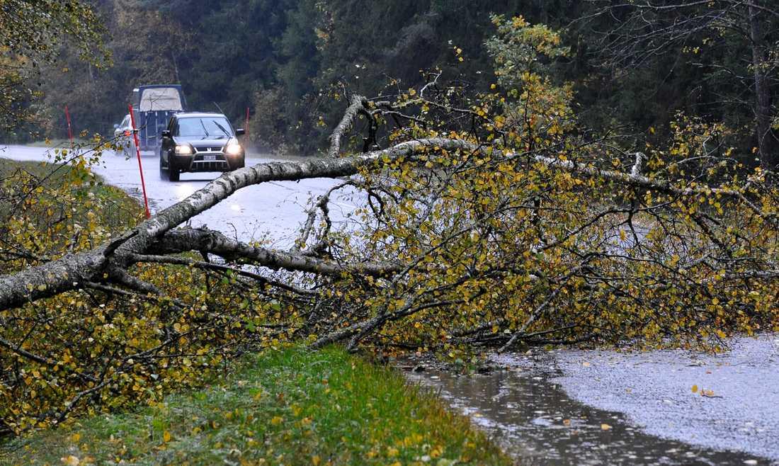 Träd kan knäckas och höga fordon kan få problem, enligt SMHI.