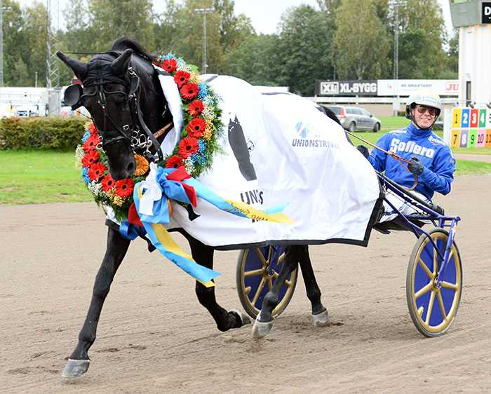 GÅR TILL AVEL Björn Goops Your Highness slutar tävla efter helgens seger på V75