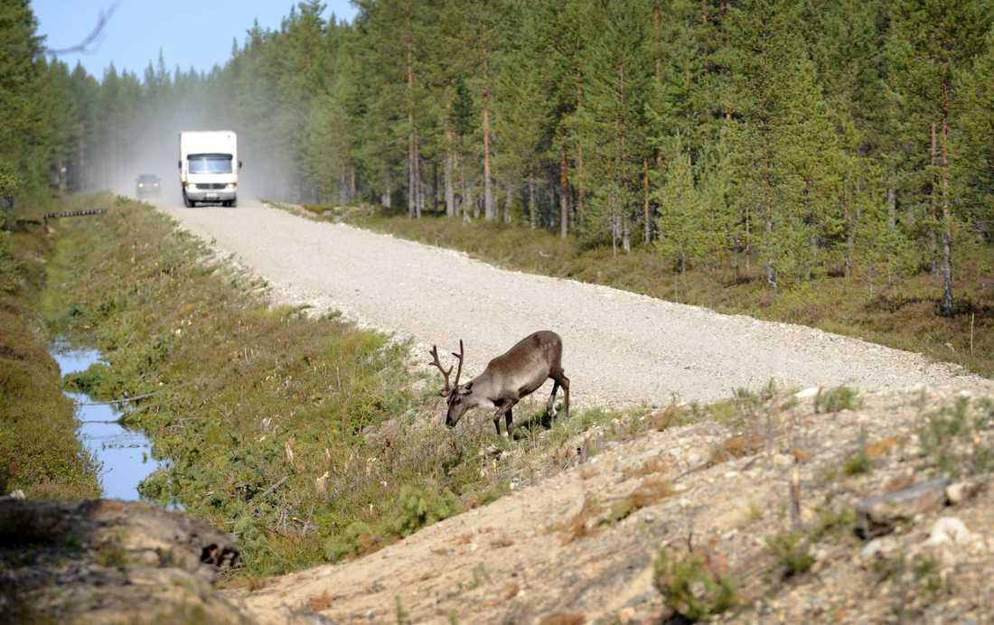 En ren som gav sig upp på en väg i finska Lappland orsakade en trafikolycka under en militärövning och tolv militärer skickades till sjukhus. Arkivbild.