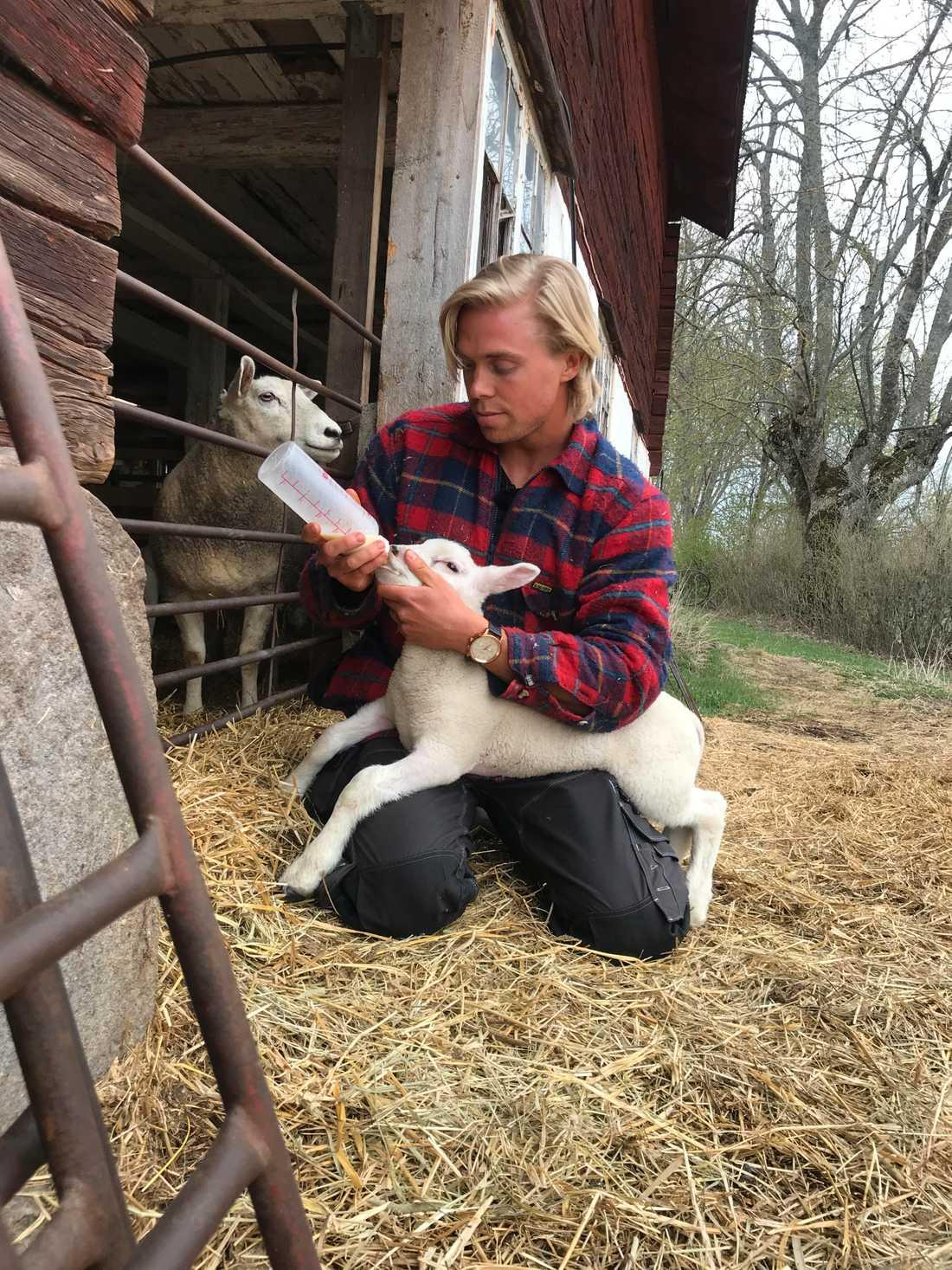 Lammbonden Mattias på gården.
