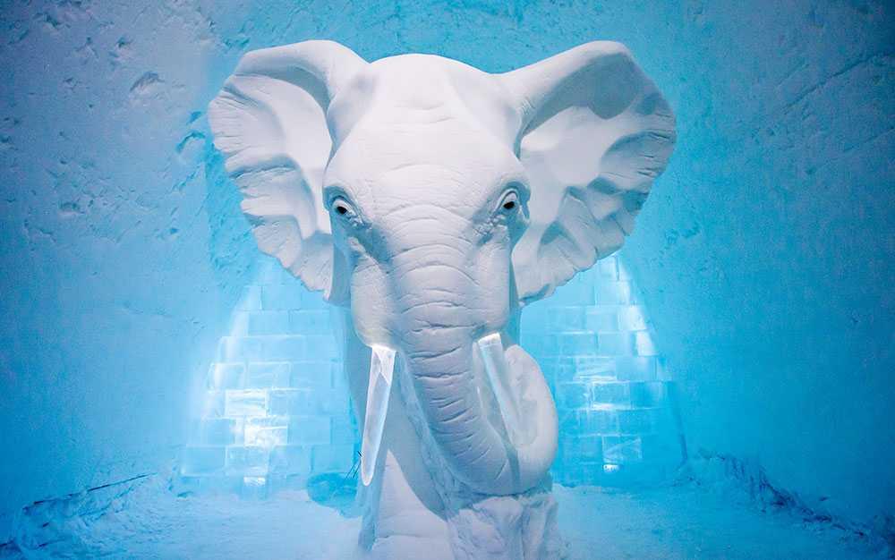 """Ett konstverk i en av konstsviterna på Icehotel. Verket heter """"Elephant in he Room"""" och är skapad av AnnaSofia Mååg."""