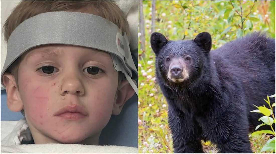 3-årige Casey var försvunnen i flera dagar, fick hjälp av en björn – enligt honom själv.