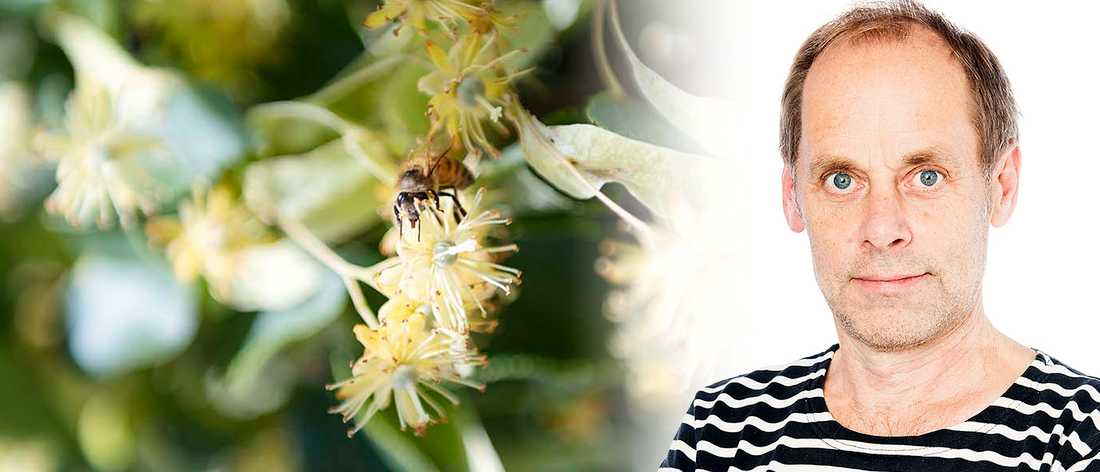 """Bakom Petter Lindgren en lindblomma, vars arom lär minna om """"övermogen melon eller papaya"""""""