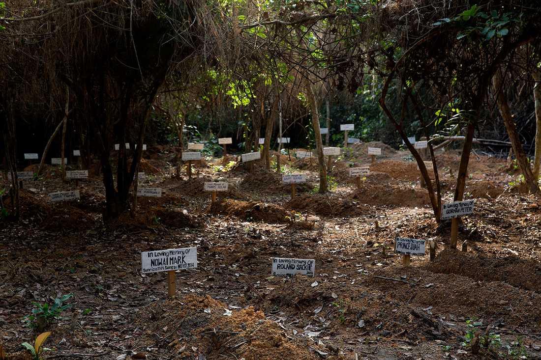 På en begravningsplats inne i djungeln vilar de som inte överlevt smittan. Det finns 160 gravar där.