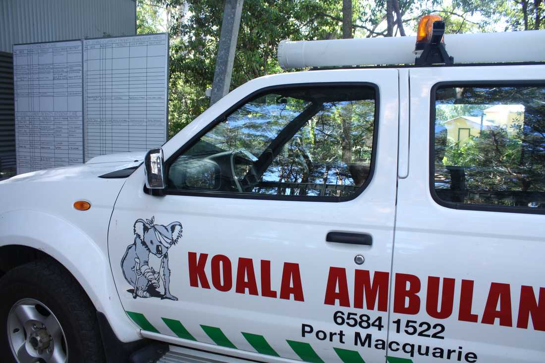Koalasjukhuset i Port Macquarie har en koalaambulans. Under brandsäsongen åkte specialutbildade volontärer med räddningstjänsten till brandhärjade koalaområden för att leta efter skadade djur. Arkivbild.