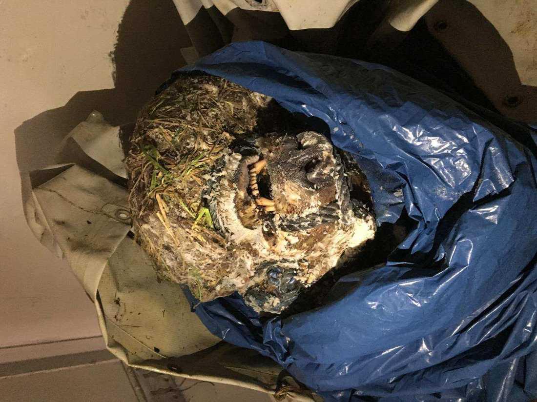 Ett nedfruset björnhuvud hittades hos en av de åtalade männen.