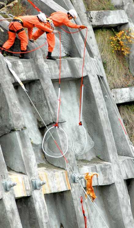 70 meters höjd Den lilla hunden satt fast på en 70 meter hög vägg - men räddades. Nu bor den på djurhem.