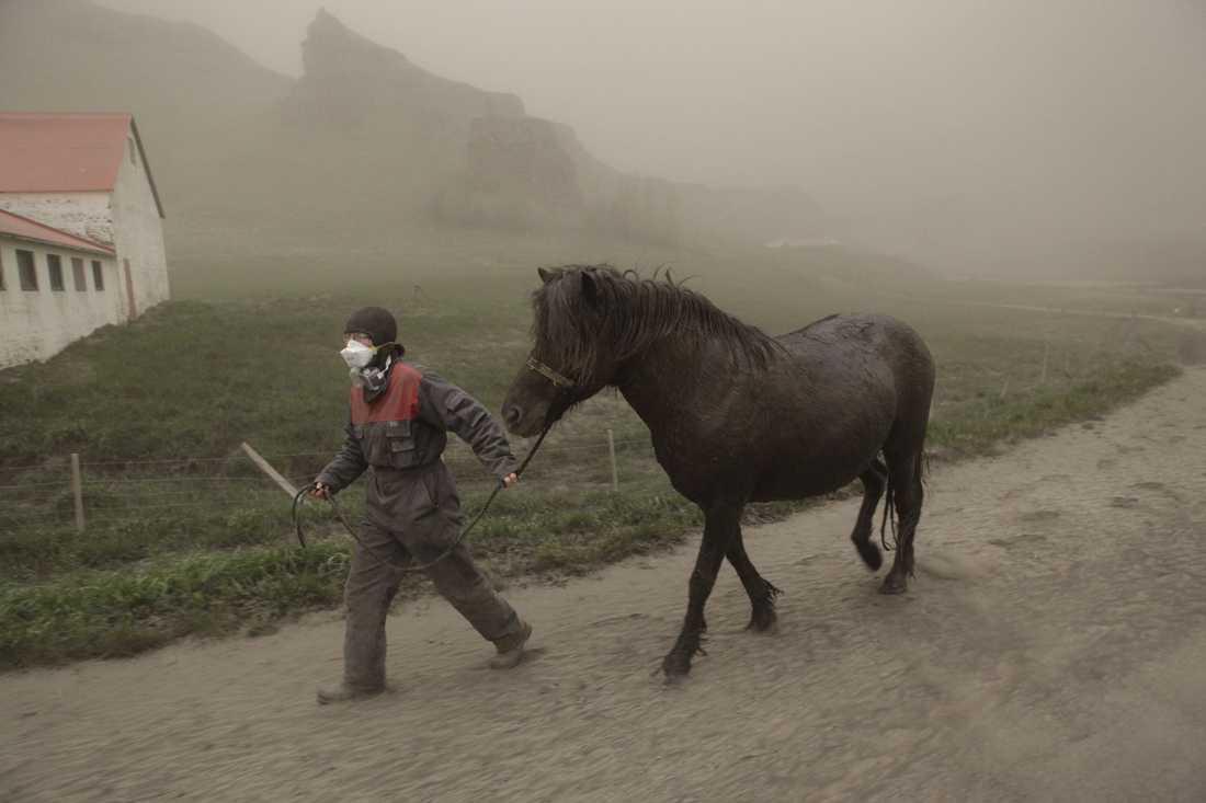 Bonden Anna Hardadottir leder in en häst i stallet för att rädda den från askan.