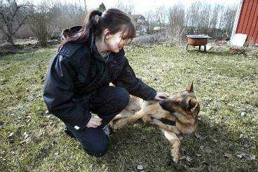 Frida-Marie Olofsson är en av de första hundtränarna i Sverige som utbildats till brandvarnarinstruktör. Här övar hon med schäferhanen Eros, 6.