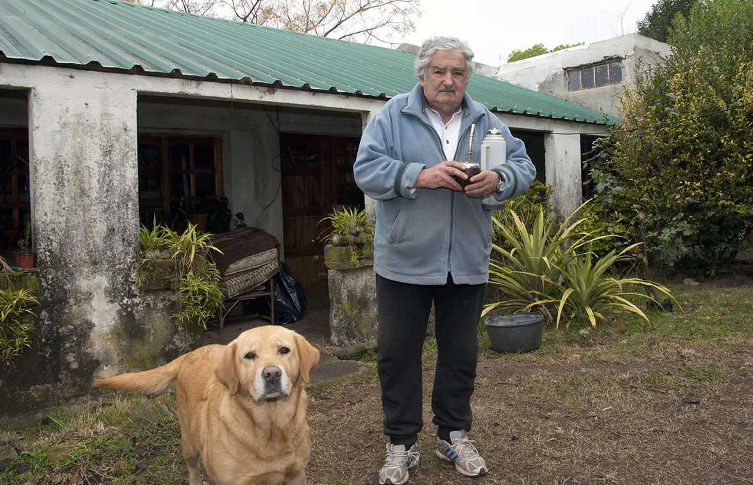 Mujica vägrar bo i presidentpalatset. I stället bor han på den familjeägda bondgården utanför Montevideo. Här syns han med sin hund.
