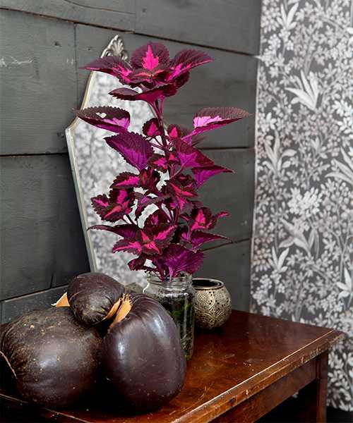 Detalj från vardagsrummet. En av Kristins många palettblad lyser starkt mot den mörka väggen. De gamla boxningshandskarna är ett loppisfynd