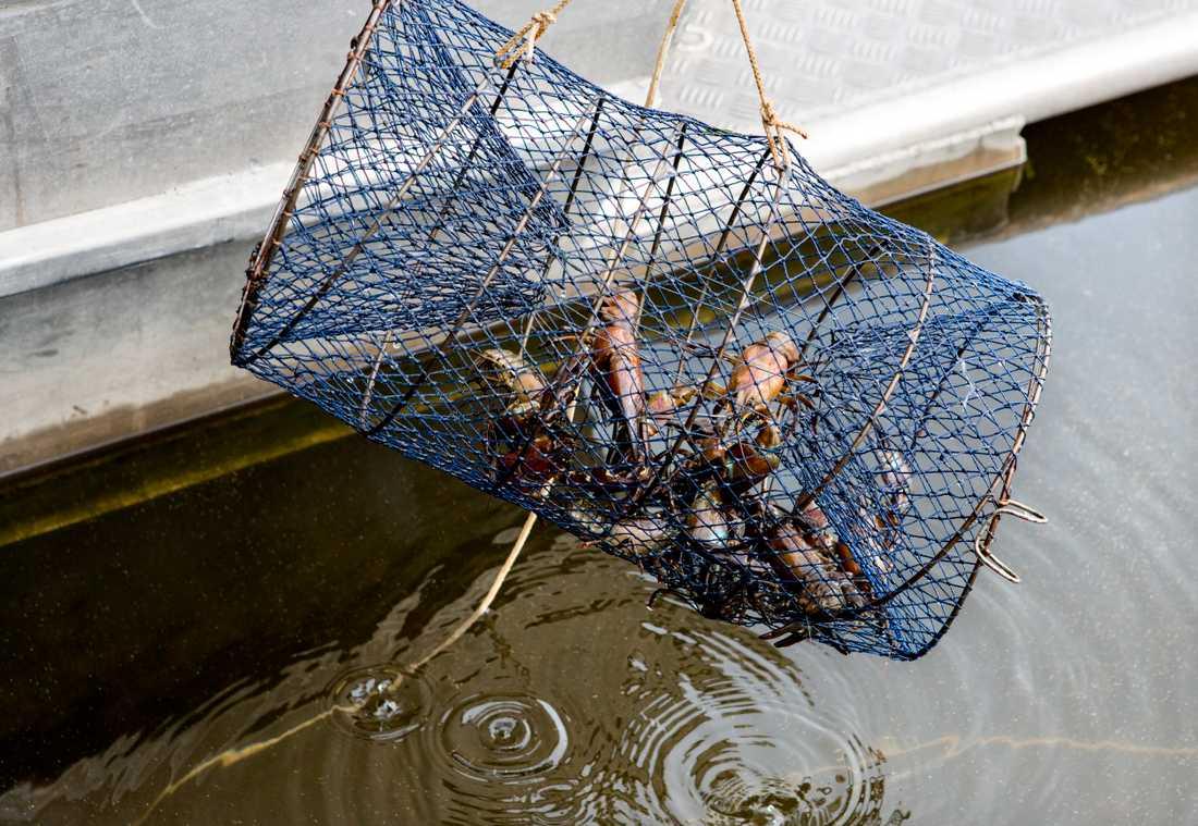 Efter årsskiftet kommer nya regler för kräftfiske att införas. Arkivbild.