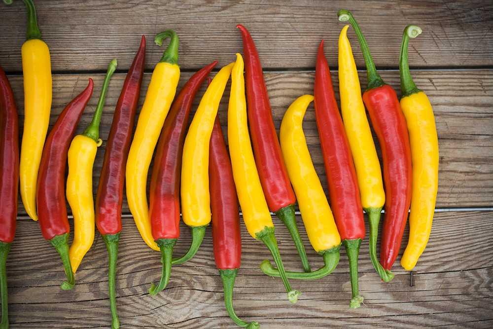 Krydda till maten med chili från egen odling.