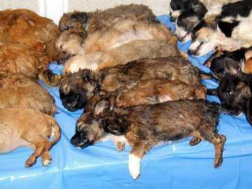 offer för handeln Hundvalpar köps utomlands för att säljas dyrt i Sverige. Frakten är ofta mycket plågsam för djuren.