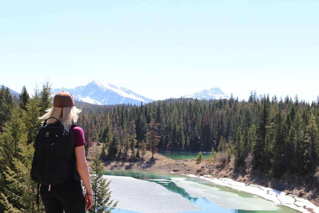 Paret var på väg från en utflykt i naturreservatet Jasper.