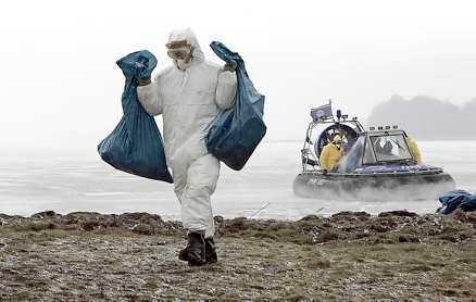 Närmar sig Döda svanar hittades utanför ön Rügen i förra veckan. Igår hittades döda viggar utanför Oskarshamn. Myndigheterna har hittills hanterat situationen bra, men beredskapen inför en pandemi måste bli bättre.