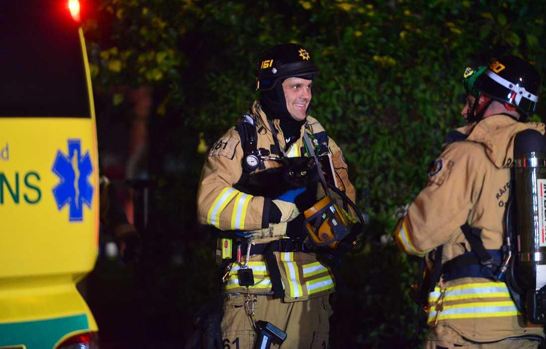 En kvinna, en hund och tre katter räddades från den brinnande lägenheten på tionde våningen.
