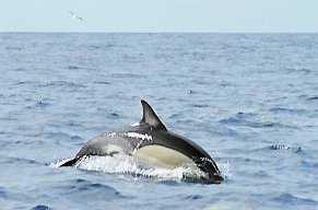 Delfinerna tittar i alla fall fram.