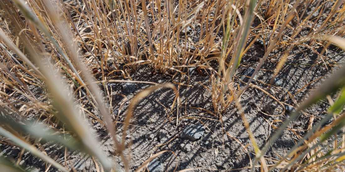 Lantbrukare som drabbats av sommarens torka får 4,7 miljoner kronor från Jordbruksverket.