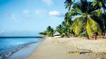 Pigeon Point är den mest välbesökta stranden på Tobago. Här hittar du lätt skugga under en egen palm om du inte vill sola eller simma i det kristallklara vattnet.
