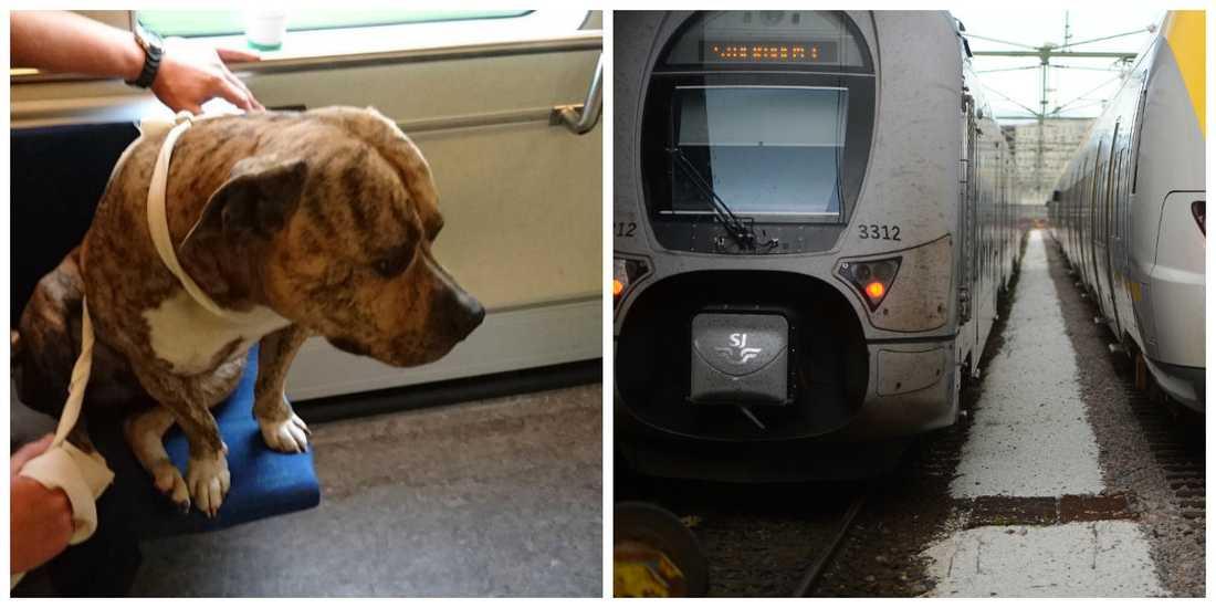 Hunden bytte tåg i Mellerud – ville inte till Göteborg.