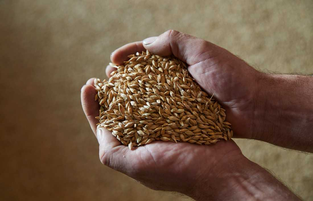 Skördeprognosen ser god ut för landet som helhet för både spannmål och oljeväxer, även om det kan finnas lokala variationer.