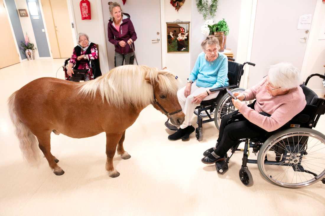 Klart man måste ta en bild för att minnas när ponnyn Martin kommer på besök.