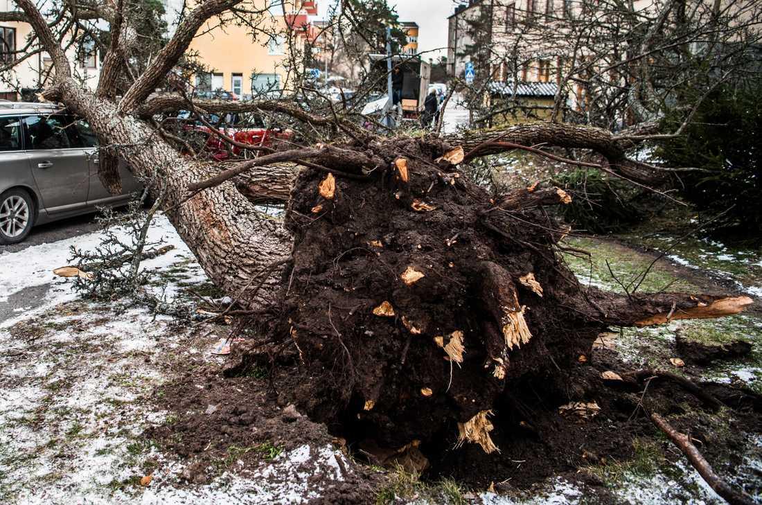 Stormen Alfrida orsakade problem och störningar i hela landet.