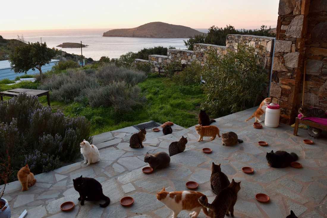 Man får bo gratis på den grekiska ön om man sköter om katterna på hemmet.