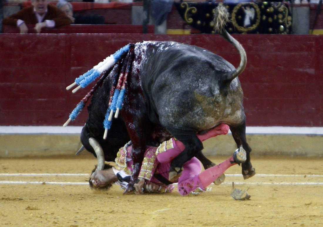 spetsas Matadoren Juan Jose Padilla får hornet rakt i ansiktet.