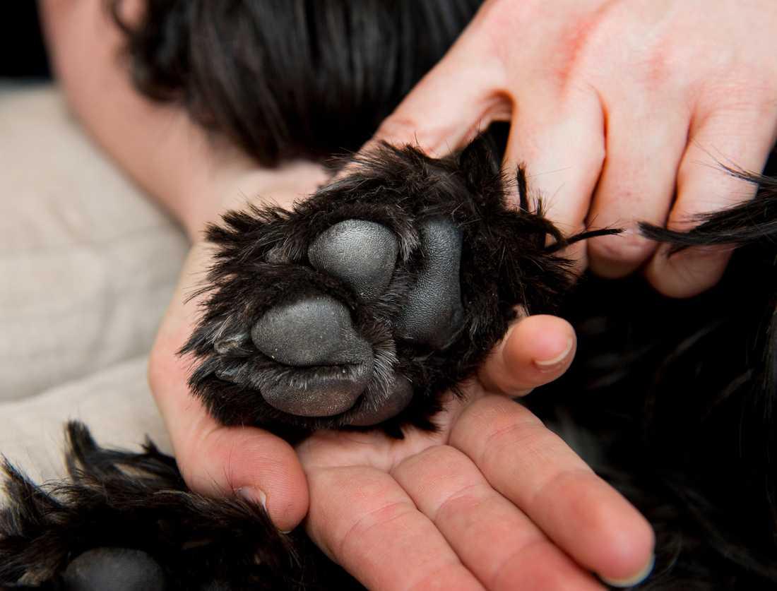 Polisen i Västerbotten har omhändertagit ett 80-tal hundar från en person i länet. Arkivbild.
